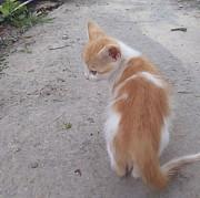 Отдам котят в хорошие руки Луганск ЛНР