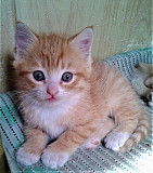 Отдам даром котёнка Свердловск/ЛНР