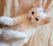 Чудесным мальчикам котятам нужна семья Донецк ДНР