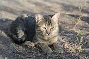 Срочно, кошка ищет жильё! Луганск ЛНР