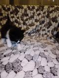 Отдам бесплатно кошку Донецк ДНР