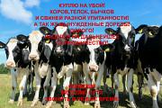 Закупка КРС и свиней Луганск ЛНР