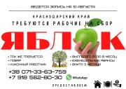 СРОЧНО ТРЕБУЮТСЯ РАБОЧИЕ НА СБОР ЯБЛОК Донецк ДНР